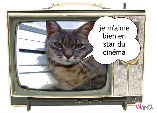 star de cinema, lolcats réalisé sur Wamiz