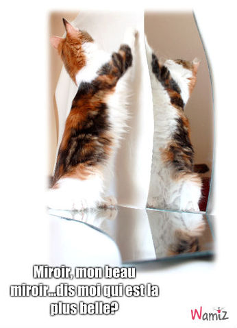 miroir, lolcats réalisé sur Wamiz