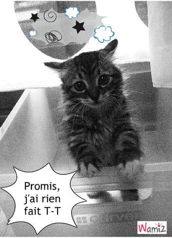 Mon ptit chat poté !, lolcats réalisé sur Wamiz