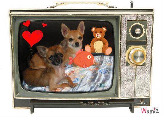 mes chiens, lolcats réalisé sur Wamiz