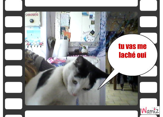 mon chat chat , lolcats réalisé sur Wamiz