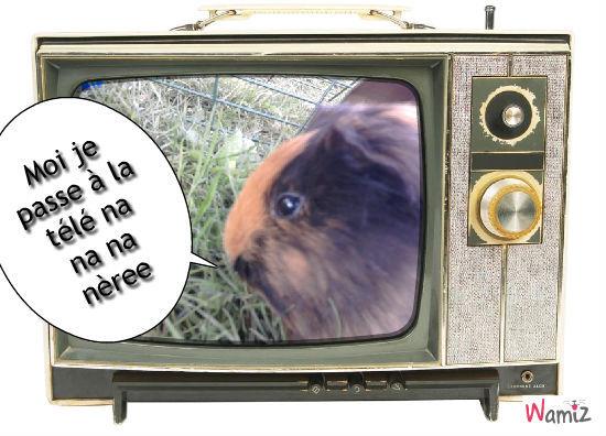 Moi je passe à la télé na na nèree !!, lolcats réalisé sur Wamiz