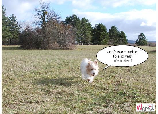 Courir les oreilles au vent !, lolcats réalisé sur Wamiz