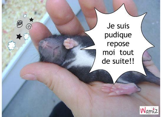 rat , lolcats réalisé sur Wamiz