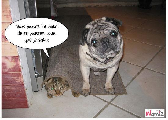 comme chat et chien, lolcats réalisé sur Wamiz
