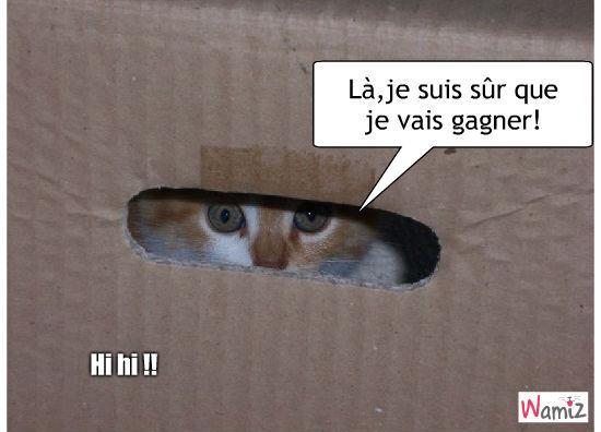 chat qui joue a cache,cache, lolcats réalisé sur Wamiz