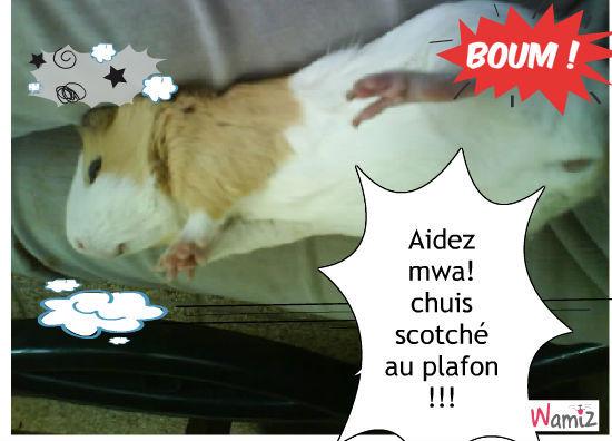 cochon d'inde scotché au plafon !, lolcats réalisé sur Wamiz