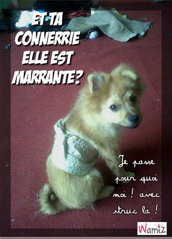 Photo Marrante Animaux