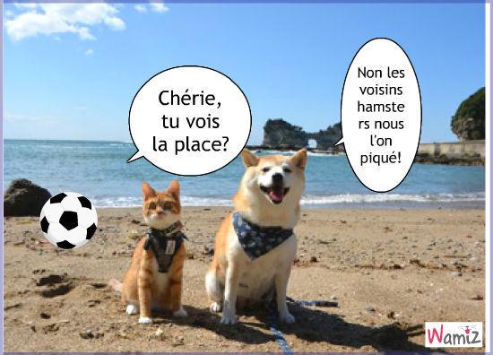 image animaux a la plage
