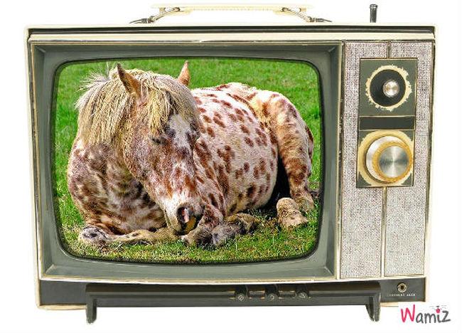 a la télé, lolcats réalisé sur Wamiz