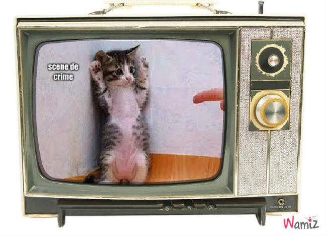 à la télé, lolcats réalisé sur Wamiz
