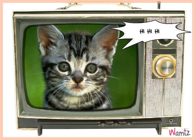 A moi mon chat, lolcats réalisé sur Wamiz
