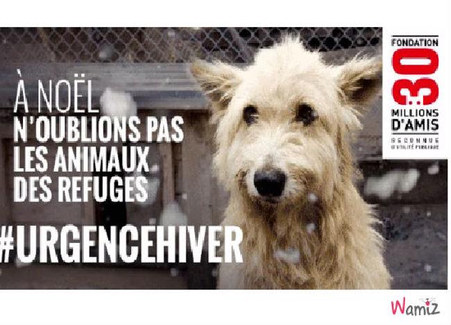 Aidez les animaux sans maitre, lolcats réalisé sur Wamiz
