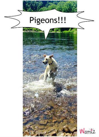 Alerte: Pigeons!, lolcats réalisé sur Wamiz