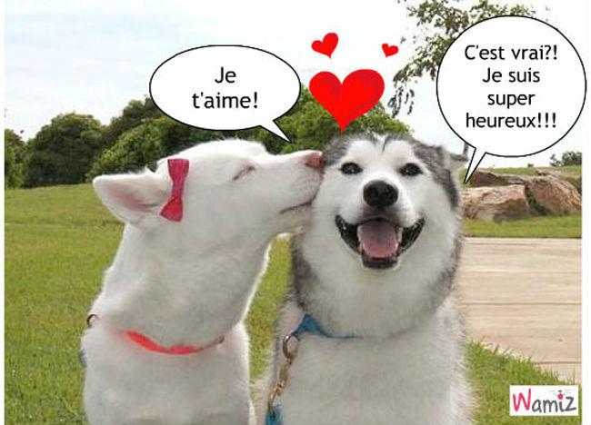 amour entre chiens, lolcats réalisé sur Wamiz