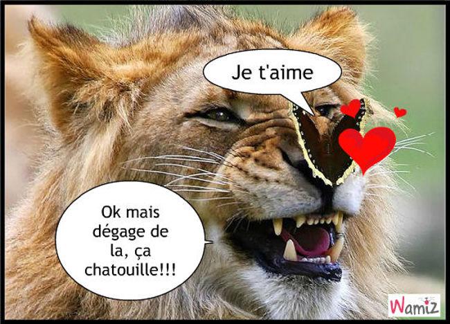 amour entre lion et papillon, lolcats réalisé sur Wamiz