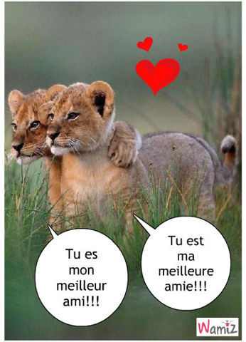 amour entre lionceaux, lolcats réalisé sur Wamiz