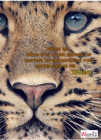 Amuse toi même si tu as des défauts d'un tigre !, lolcats réalisé sur Wamiz