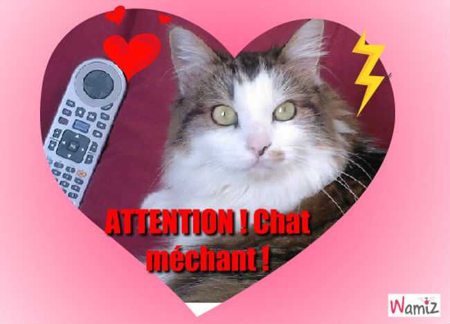 Attention caht méchants 