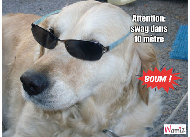 Attention swag !, lolcats réalisé sur Wamiz