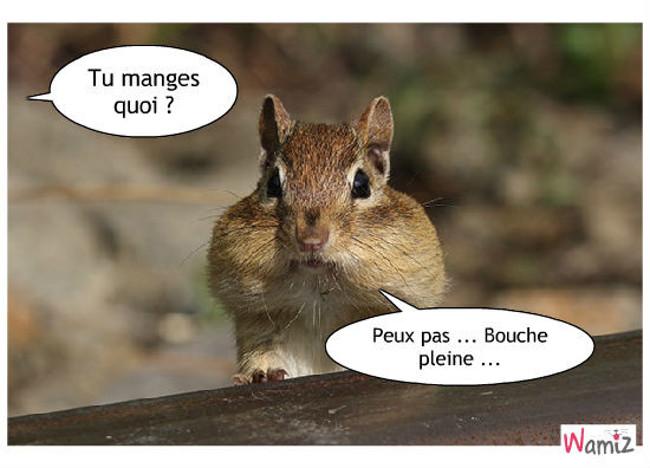 Avoir la bouche aussi pleine qu'un écureuil, lolcats réalisé sur Wamiz