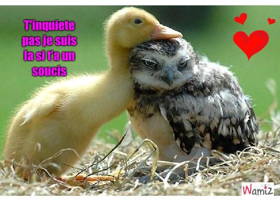 Rsultat de recherche dimages pour ami canard
