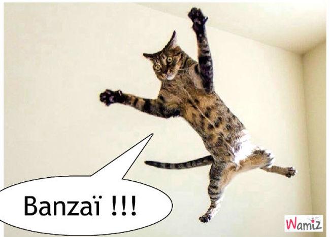 Banzaï, lolcats réalisé sur Wamiz