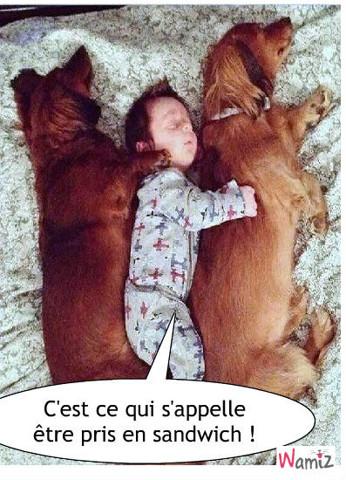 Beau Sandwich canin, lolcats réalisé sur Wamiz