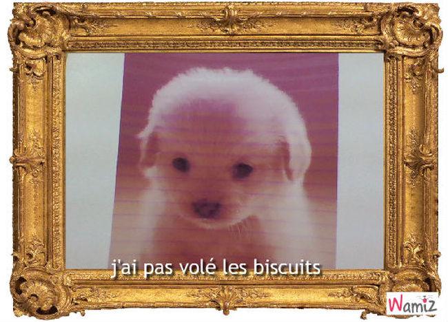 biscuit, lolcats réalisé sur Wamiz
