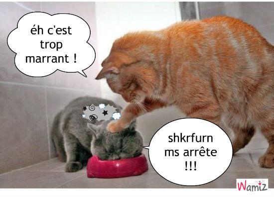 humour Blague-des-chats-blagues-de-chat-33203
