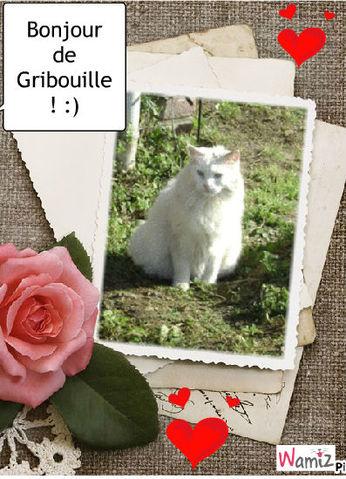 Bonjour de Gribouille, lolcats réalisé sur Wamiz