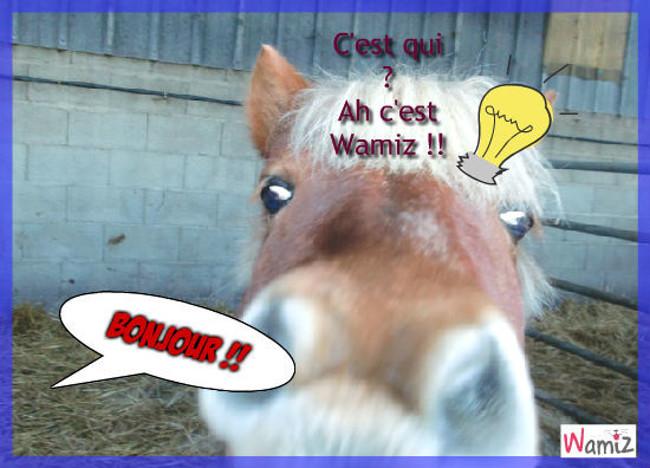 Bonjour Wamiz!!, lolcats réalisé sur Wamiz