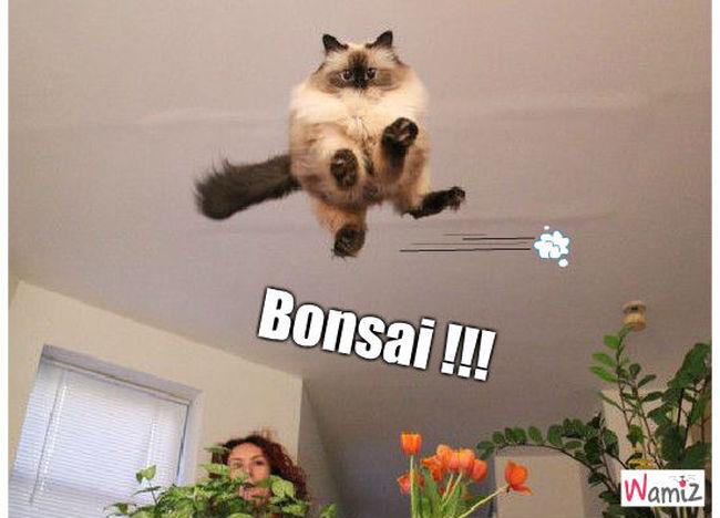 Bonsai !!!, lolcats réalisé sur Wamiz