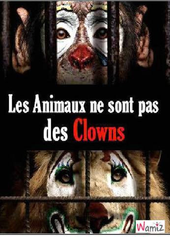 Boycott des cirques avec animaux, lolcats réalisé sur Wamiz