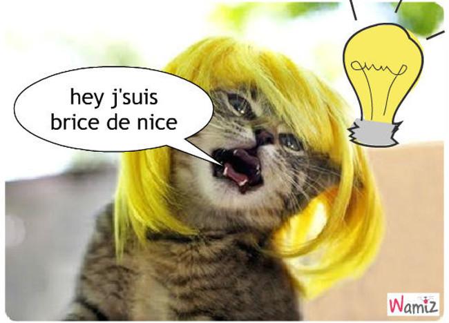 brice de nice en chat, lolcats réalisé sur Wamiz