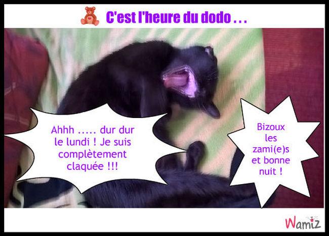 C'est l'heure du dodo !, lolcats réalisé sur Wamiz