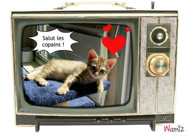 C'est moi Kitty !, lolcats réalisé sur Wamiz