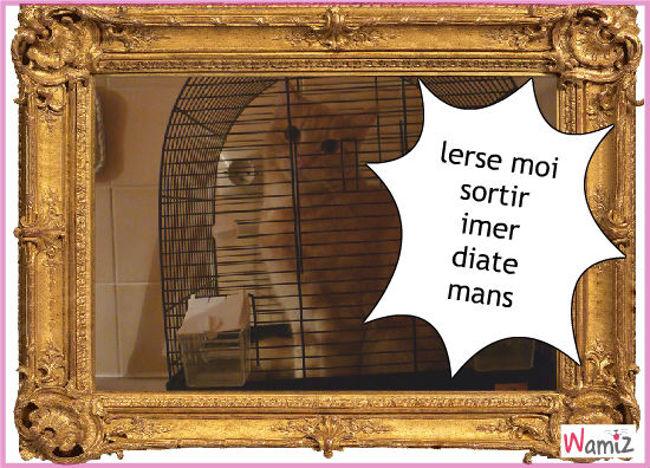 cage, lolcats réalisé sur Wamiz