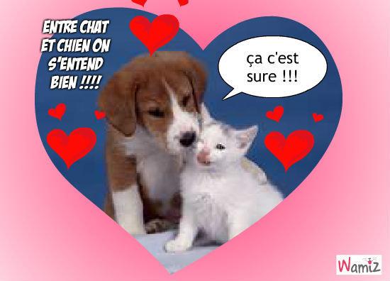 Animaux mignon chiot puppies chien fond d39cran animals - Photo de chiot a imprimer ...
