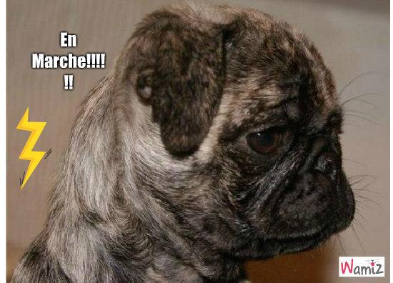 Carlin En Marche!!!!, lolcats réalisé sur Wamiz