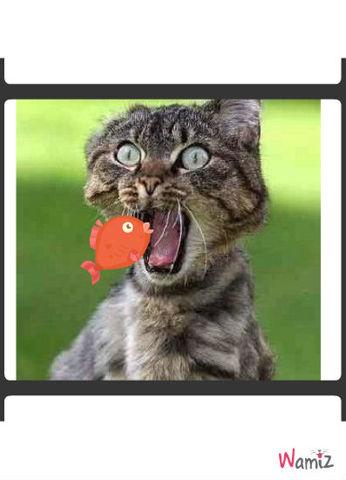 cat fish, lolcats réalisé sur Wamiz