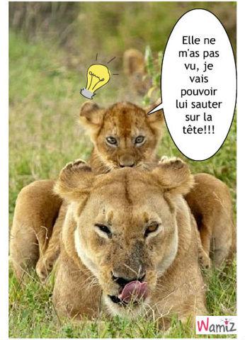 chamaileries lionceau et lionne, lolcats réalisé sur Wamiz
