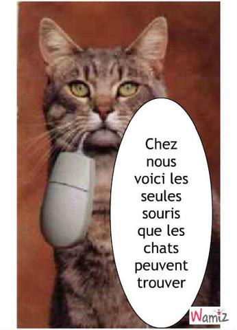 chat, lolcats réalisé sur Wamiz