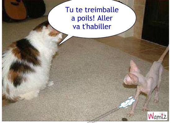 chat a poils rat, lolcats réalisé sur Wamiz