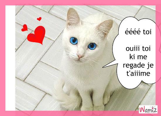 chat adorable , lolcats réalisé sur Wamiz