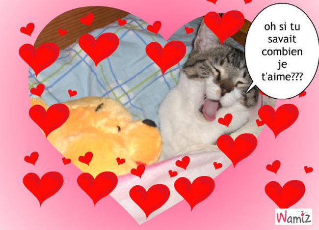 chat aimant sa peluche, lolcats réalisé sur Wamiz
