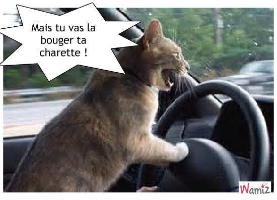 Chat au volant..., lolcats réalisé sur Wamiz