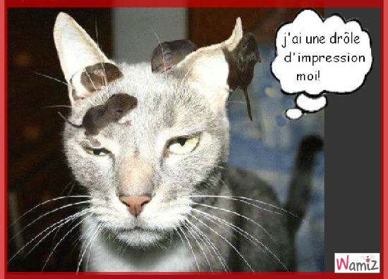 Chats rigolos marrant - Photo chat marrant ...