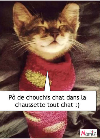 Chat bien comme chat :), lolcats réalisé sur Wamiz