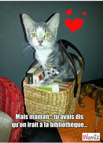 chat c'est pas juste, lolcats réalisé sur Wamiz